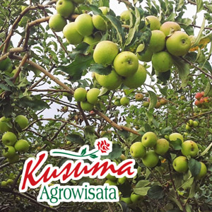 Kusuma-Agowisata